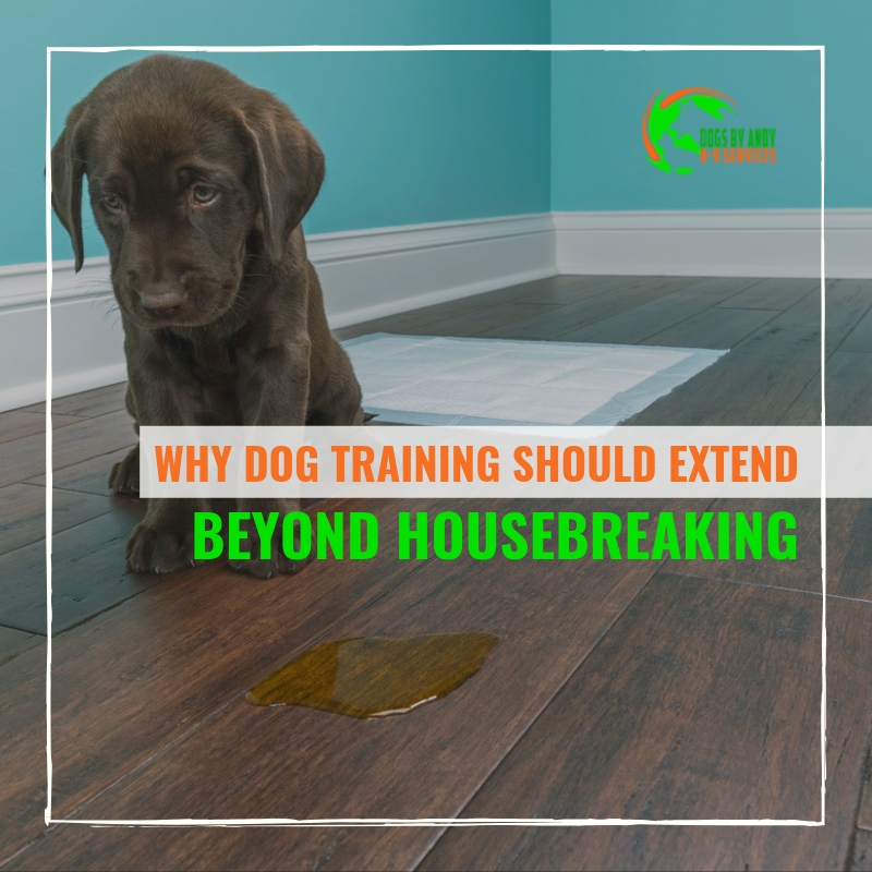 Why Dog Training Should Extend Beyond Housebreaking