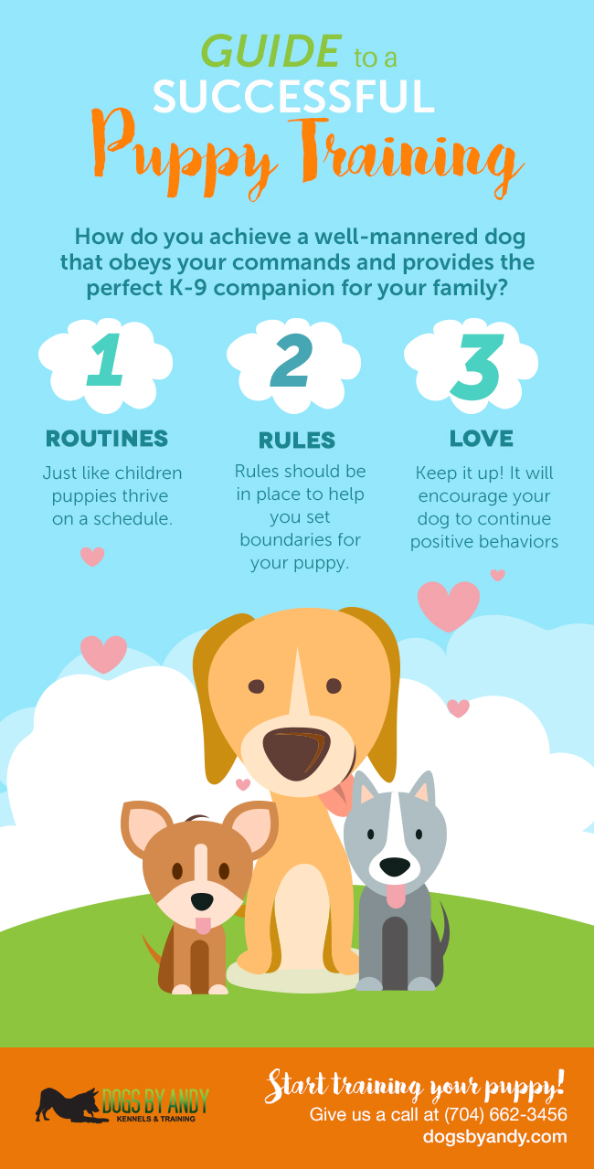 Guide for Successful Puppy Training