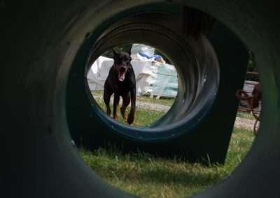 Dog Training School in Davidson, North Carolina