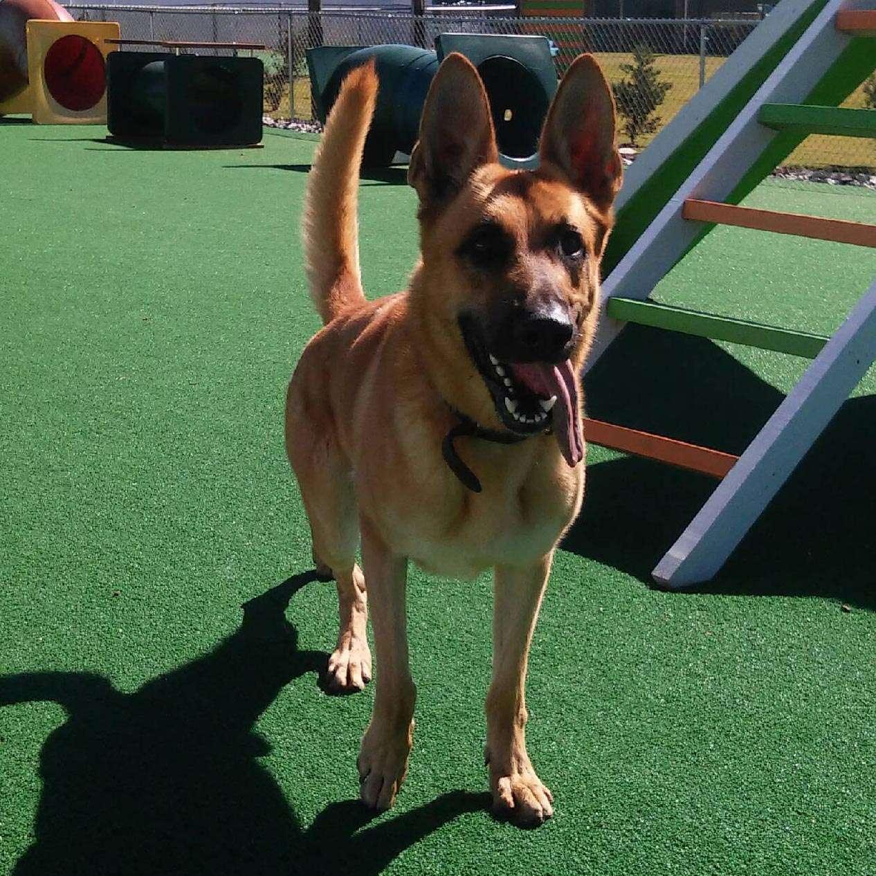 Dog Protection Training in Salisbury, North Carolina