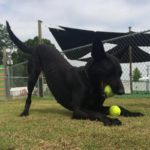 Dog Training Services, Concord, NC