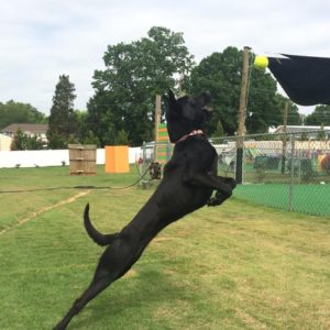 Dog Training Classes in Salisbury, North Carolina