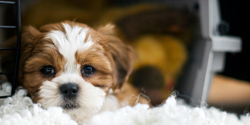 Puppy Kennels: What Not To Do