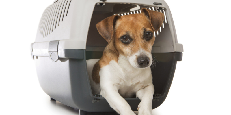 finding dog kennels that are of the quality and size you want