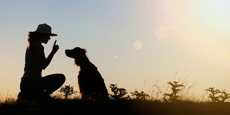 find the perfect dog trainer