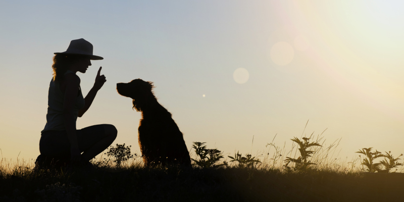 An effective dog trainer will involve you in the training process as much as possible