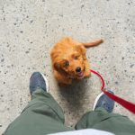 Puppy Training in Greensboro, North Carolina
