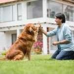 Dog Training School in Greensboro, North Carolina