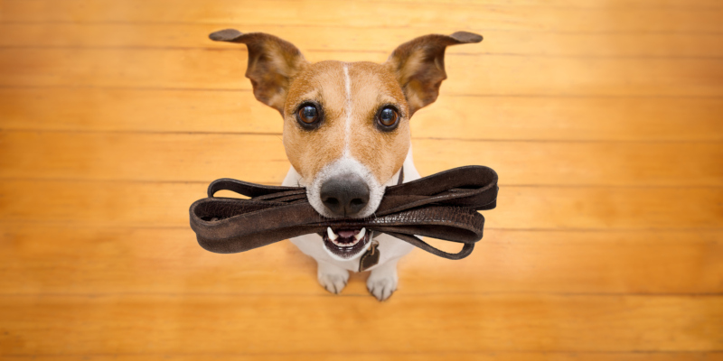 You can find out a lot of information about specific dog training classes offered in your area