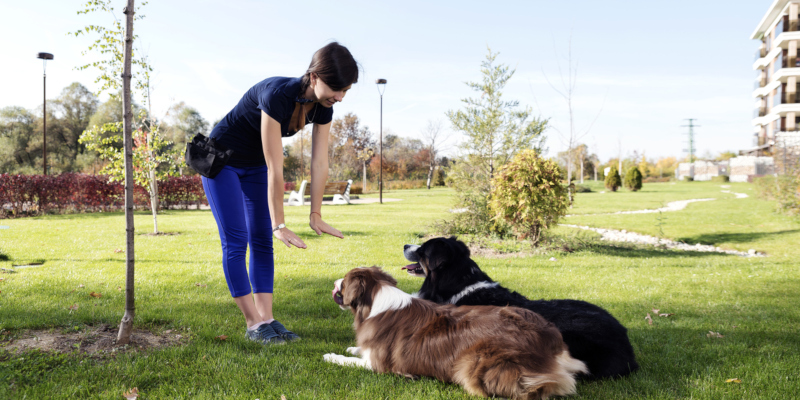want to choose in-kennel training for your dog