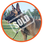 Sold Dogs