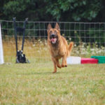 Obedience Training in Mooresville, North Carolina